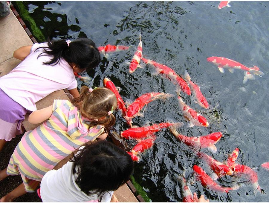 Tüm dünyada sosyal tesis ve eğlence parklarının en çok ziyaretçi çeken bölümü olan koi-park artık AQUACALIX farkıyla tesislerinizde. Mesire amaçlı
